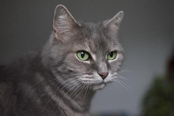 Взаимосвязь между котами и болезнями человека