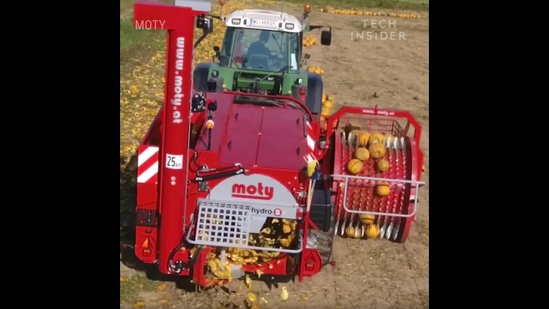 This machine harvests pumpkin seeds