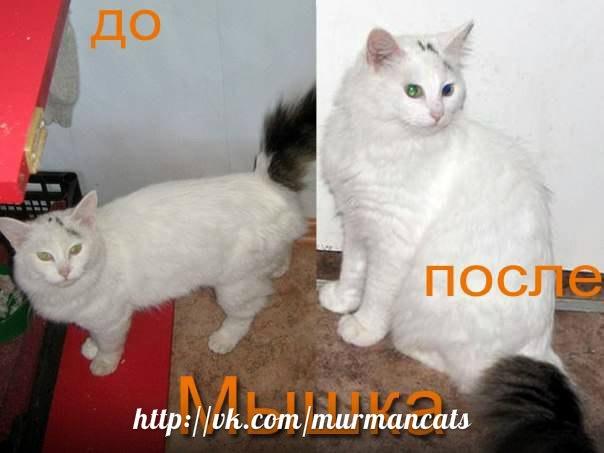 До и после. Мышка.