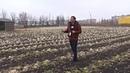 Народный контроль. Почему на полях ГП 'Теплицы Донбасса' гниёт урожай 14.12.18-2