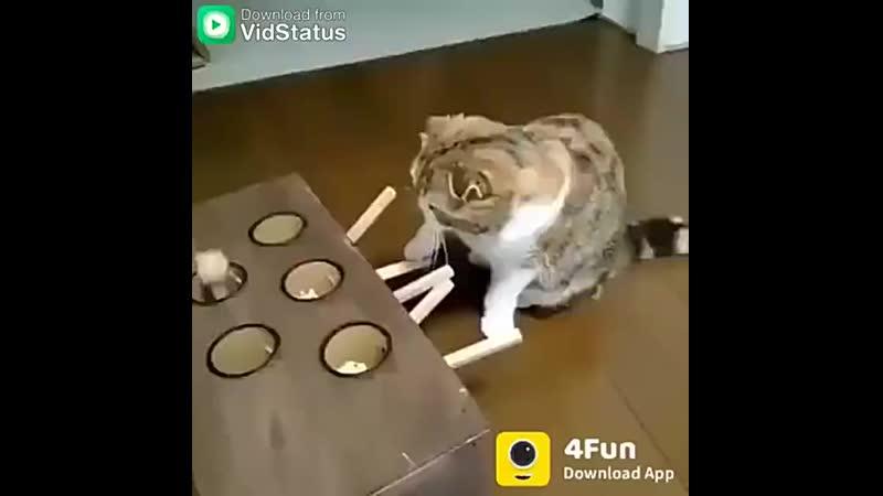 игрушка для кашаков