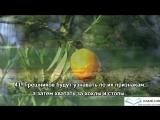 Слушать Коран.Сура 55.Ар-Рахман.(Милостивый).Чтец Мишари Рашид аль-Афаси.Природа.mp4