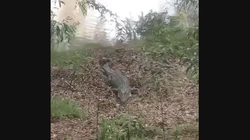 Нет зверя страшнее собаки!
