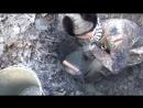 Раскопки немецкого Блиндажа с посудой Excavations of German dugout