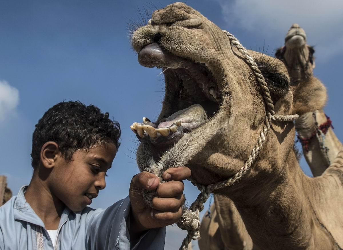 С широко раскрытым ртом: Египетский мальчик и его горбатый друг