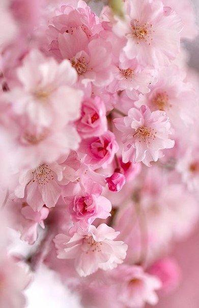 С Весной, Любимые!
