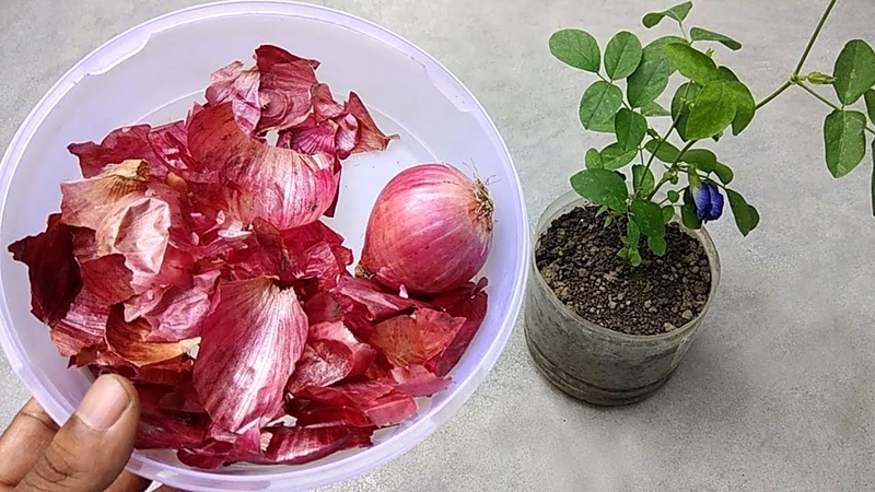 Use of onion peel for plants | Best natural fertilizer for any plants