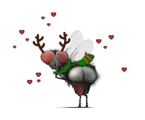 Картинки прикольные на аву с мухой