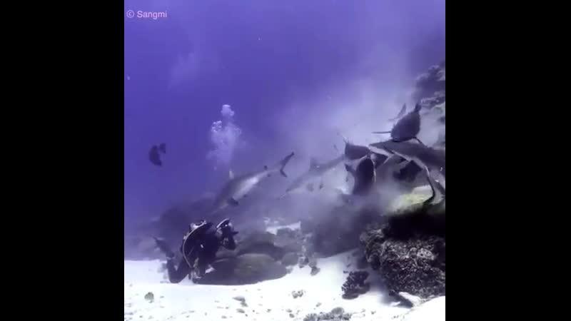 Подводная тусовка