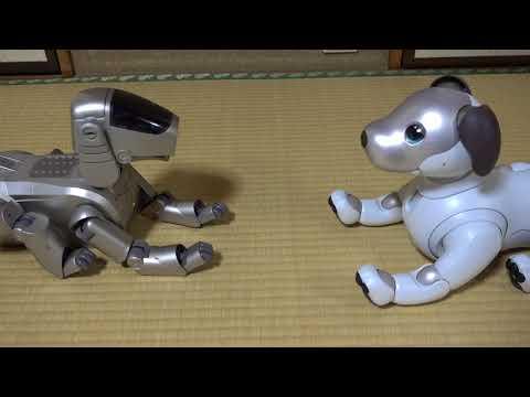 Aiboと先輩AIBOのご対面・2018年1月12日