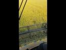 Cosí si raccoglie il famoso riso della Pianura Padana