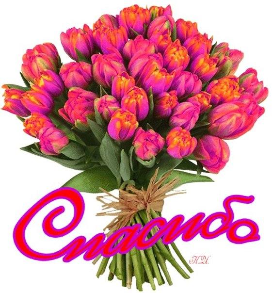 Картинки цветы красивые - Смотреть картинки