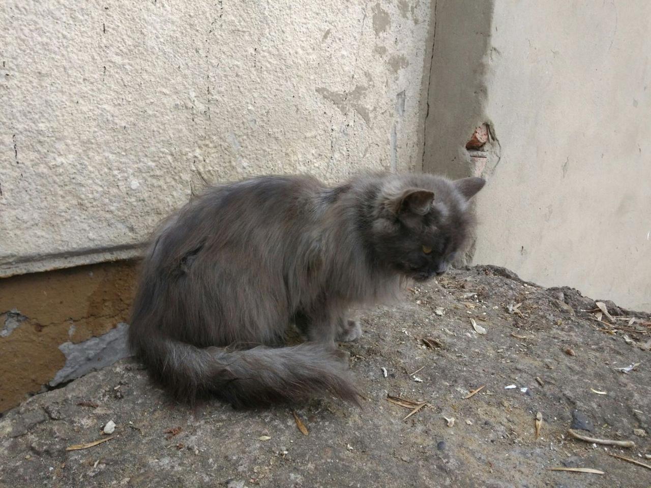 #нужна_финансовая_помощь@vmestepnz_animals #Афина_ID50 НУЖН