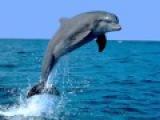 Sound dolphin, dolphin cry,voice dolphin  Звук дельфина, крик дельфина, голос дельфина