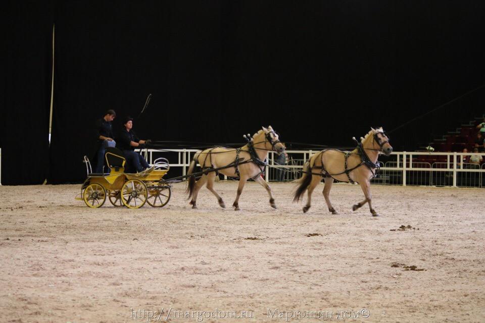 Horse-driving.ru - О езде в упряжи - Главная RO7PL0QxDeY