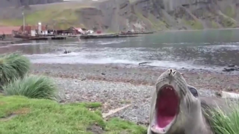 Тюлень Ктулху из подводного города Р'льех (Пх'нглуи мглв'нафх Ктулху Р'льех вгах'нагл фхтагн)