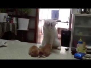  Смешны кошки - Лучшие моменты 2013 года про смешных кошек. Это супер.