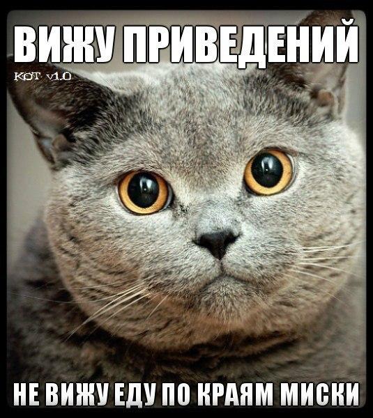 http://cs407529.vk.me/v407529292/7ca2/e1debbJ-R7Y.jpg