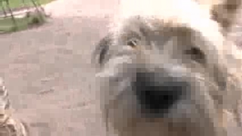 001 да уж любимых собак певца пророка сан боя рыжика и бельчика больше нет горько и досадно
