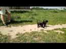 пометЗ - первая прогулка