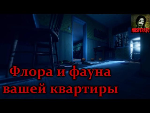 Истории на ночь - Флора и фауна вашей квартиры и как её бояться