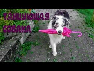 Приколы и забавные моменты с собаками Январь 2018