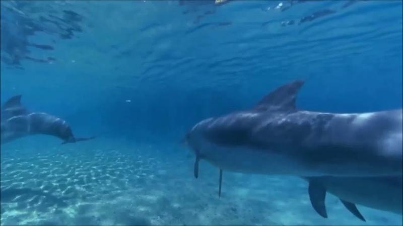 Э. Артемьев - Тема из м/ф Девочка и дельфин