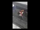 Необычное противостояние краб вооружённый ножом отразил атаку повара