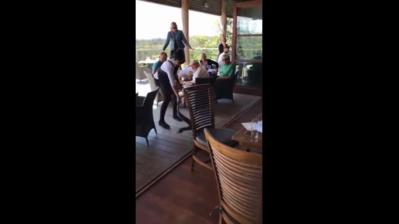 Уберите свои гразные руки! Пьяный ящер подрался с человеком в баре и был выпровожден из заведения.