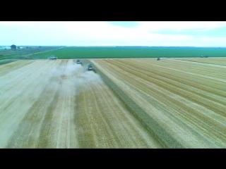 Уборка урожая озимой пшеницы - ООО