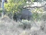 Африканская охота -- часть 3