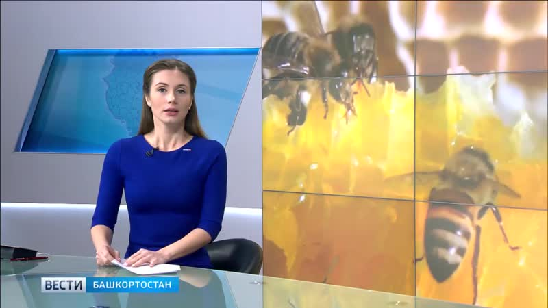 Бурзянскую пчелу защитят от скрещивания с другими породами пчел