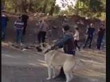 Serkan in Efsun vs Meskodan Gelen Efe 15 10 2013