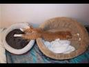 ПОПРОБУЙ НЕ ЗАСМЕЯТЬСЯ - Смешные Приколы и фейлы с Животными до слез, смешные коты 70