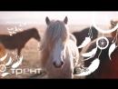 заставка август лошадь
