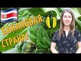 КОСТА РИКА Как растут бананы в природе