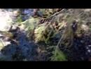 Путь по болоту к Камню Велеса часть 1