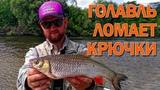 ДИКИЙ ГОЛАВЛЬ РВЕТ СНАСТИ И ЛОМАЕТ КРЮЧКИ! Ловля голавля на блесны сплавом на реке Сейм