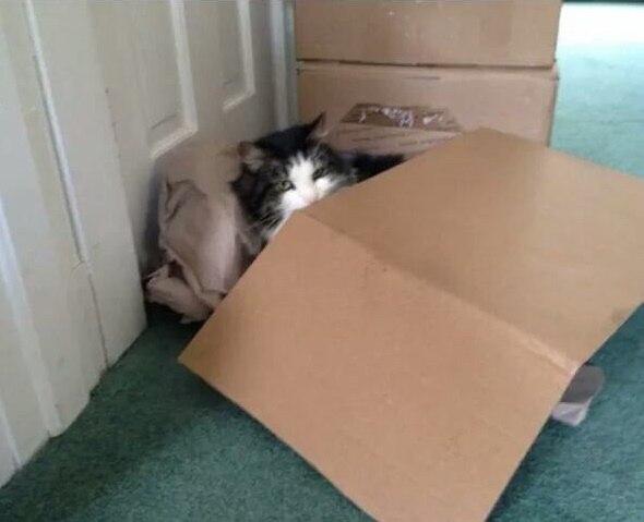 Кот построил крепость, пока я был на работе