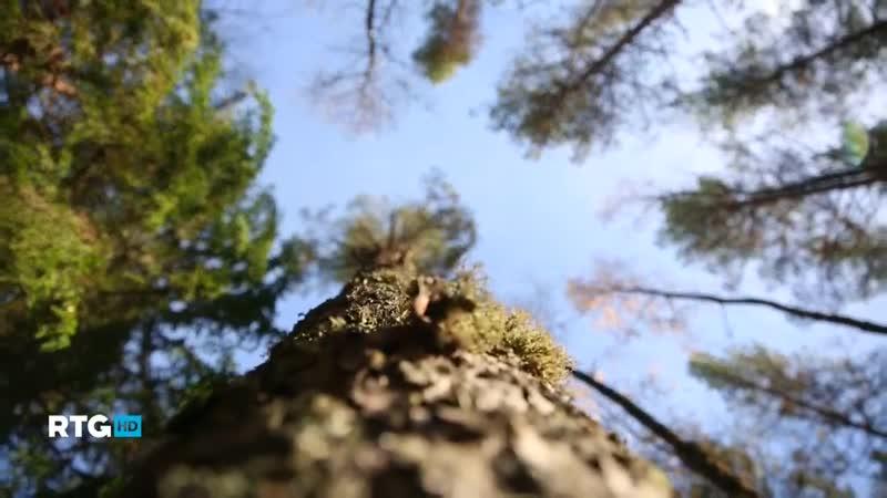 Природный парк «Вепсский лес» (RTG TV HD)