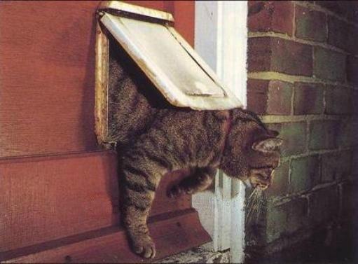 Исаак Ньютон изобрел дверь для домашних кошек