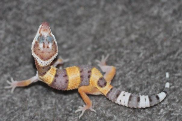 Различные рептилии KbjTR_GRXTM