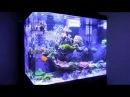 Kobe's Red Sea Max 130D Reef Tank