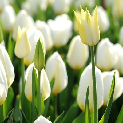 Primavera Prima, 25 февраля , Киев, id224586850