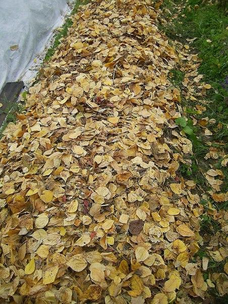 Уход за цветниками-мульча - старая листва