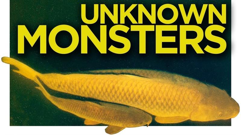 Catching Monster Carp in America Full Carp Fishing Movie