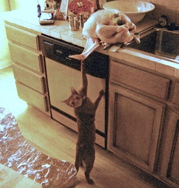 20 животных, которых можно только понять и простить: ↪ Я всё объясню!