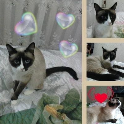 Алиса Кошка, 12 февраля , Еманжелинск, id216442627