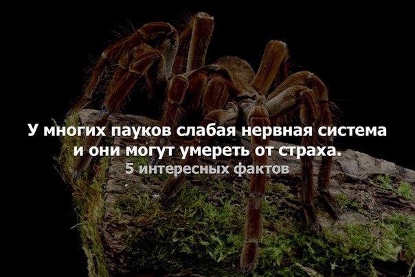 Фото №456247662 со страницы Tania Olyva
