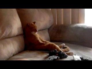 Кот-бездельник